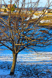 Apple tree with fruits highlighted by sunset. Long shadows of sunset covered the countryside pond and brightened the apple tree Stock Images