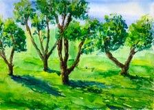 Apple tree garden Stock Illustration