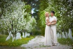 Apple-tree garden Stock Images