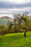 Apple tree garden on hillside meadow in mountain Royalty Free Stock Photography