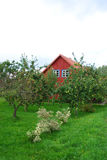 Apple tree garden. View with red cottage in the  background Royalty Free Stock Photography