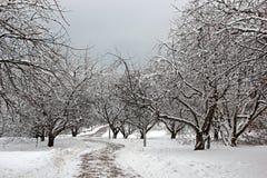 Apple tree garden in winter Stock Images