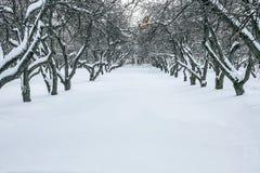 Apple-tree garden in winter Royalty Free Stock Photo