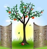 Apple tree and gates. In the sun and blue sky apple tree with red apples in the foreground of the open wrought-iron gates Stock Photography