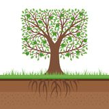 Apple tree with green apples and roots. Soil cut. Gardening concept. Flat design, vector illustration. vector illustration