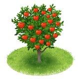 Apple Tree in green field Stock Photo