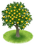 Apple Tree in green field. Summer Apple Tree with yellow apple fruits in green field, illustration Royalty Free Stock Photography