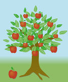 Apple tree. An illustration of a tree with leaves and apples Royalty Free Stock Photos