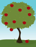 Apple tree image. An apple tree with green leaves on a green grass and blue sky background stock illustration