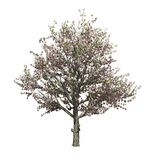 Apple tree isolated. Vector illustration Royalty Free Stock Image