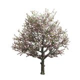 Apple tree isolated. Vector illustration Stock Photography