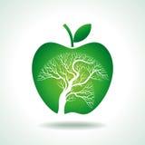 Apple tree isolated on White background Royalty Free Stock Photos