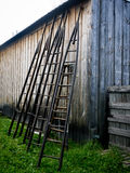 Apple Tree Ladders. Line up against a barn at an apple orchard stock image