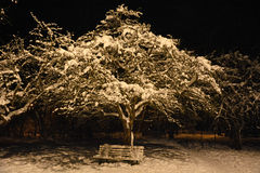 Apple tree at the night Stock Photos