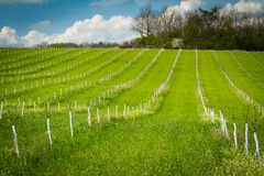 Apple tree orchard Royalty Free Stock Images