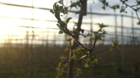 Apple tree plants summer stock video footage