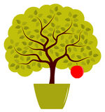 Apple tree in pot Stock Photography