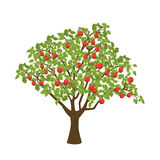 Apple tree. Apple tree with red apples.  vector illustration on white background Royalty Free Stock Photos
