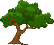 Apple tree with red apples white background. Illustration of Apple tree with red apples white background Royalty Free Stock Image