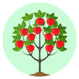 Apple tree with ripe fruits vector illustration in round button. Royalty Free Stock Photography