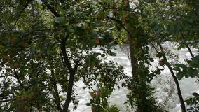 Apple tree at riverside of Passer river at Meran. Or Merano city in Italy stock video footage