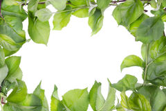 Apple tree spring leaves abstract frame Royalty Free Stock Images