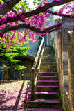 Apple-tree and stairs Royalty Free Stock Images