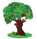 Apple tree. Summer fruit tree illustration isolated in vector format Stock Image