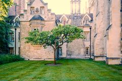 Apple tree. Symbolic apple tree in front of Trinity college, Cambridge, UK. Newton lived on one of those windows Royalty Free Stock Images