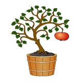 Apple tree in tub Stock Image