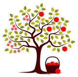 Apple tree in two seasons. And basket of apples isolated on white background vector illustration