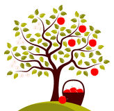Apple tree in two seasons Stock Photography