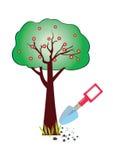 Apple tree vector. Illustration on white background Stock Photos