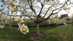 Apple tree in wind stock video footage