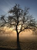 Apple tree in winter Stock Images
