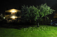 Apple tree in the yard next to car parking at night Stock Photography