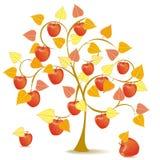 Apple tree in yellow autumn Royalty Free Stock Image