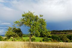Apple trees Royalty Free Stock Image