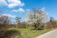 Apple Trees Along Rural Road Stock Images