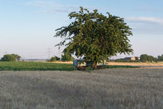 Apple Trees Along Rural Road Stock Photography