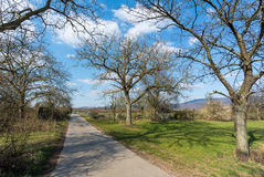 Apple Trees Along Rural Road Royalty Free Stock Image