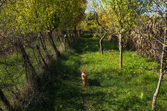 Apple Trees and cat Royalty Free Stock Photography