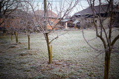 Apple trees covered with frost Stock Photo