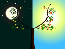 Apple trees day and night. Stock Photos