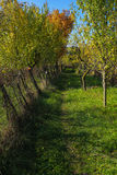 Apple Trees. Royalty Free Stock Images