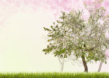 Apple trees with flowers in green grass Royalty Free Stock Image