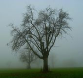 Apple trees in the fog stock photography