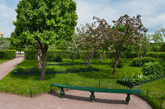 Apple trees garden Royalty Free Stock Photo
