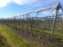 Apple trees harvest. Field, farm, land, agriculture, agro, tree Royalty Free Stock Image