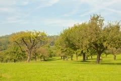 Apple trees on a meadow Stock Photos